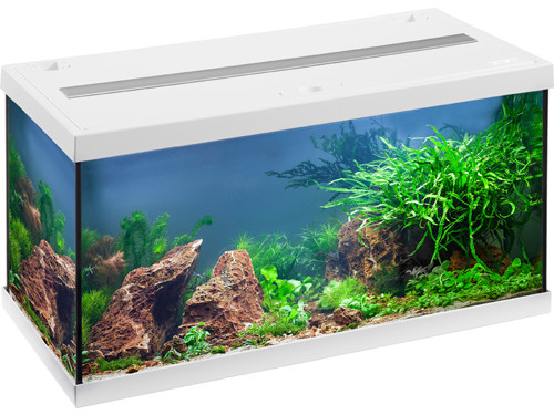 akvarie fisk lille akvarium